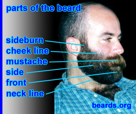 beard terminology photo